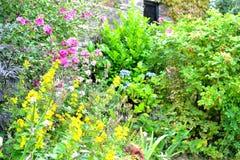 Cottage garden detail Royalty Free Stock Photos