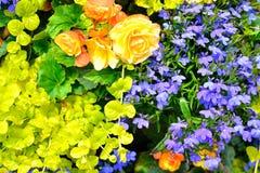 Cottage garden flowers background Stock Photo