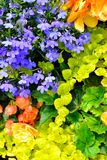 Cottage garden flowers background Royalty Free Stock Image