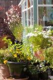Cottage garden in full bloom Stock Image