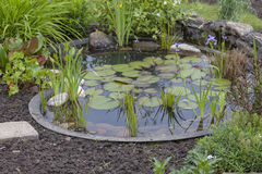 Cottage garden with pond Stock Images
