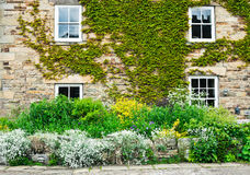 Cottage garden Stock Images