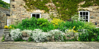 Cottage garden Royalty Free Stock Photo