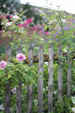 Cottage garden vintage fence. Old wooden fence with flowers in a cottage garden Stock Image