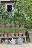 Cottage garden watering cans. English Cottage garden watering cans Stock Photography