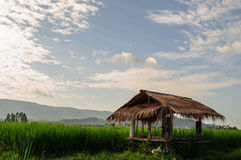 The cottage. With green rice fields Royalty Free Stock Photos
