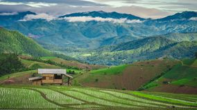 Cottage Green Terrace Rice Field With Mountain View royalty free stock photo