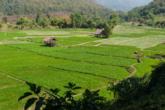 Cottage and green terraced rice field Stock Photography
