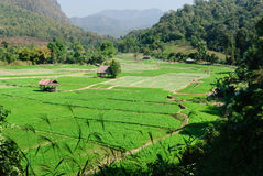 Cottage and green terraced rice field Stock Images