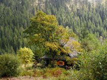 Cottage house in the mountain forest Stock Photo