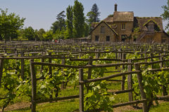 Cottage house and Vineyard on a sunny day Stock Photography
