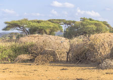 Cottage in the Masai camp Royalty Free Stock Image