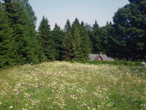 Cottage in the meadow. View of the house in the meadow stock photo
