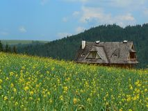 Cottage in mountain. With yellow flowers Stock Photos