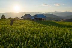 Cottage nel campo Fotografie Stock