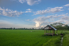 A cottage in the paddy field Royalty Free Stock Image