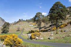 Cottage pittoresque de montagne d'Idylic en Irlande Image stock