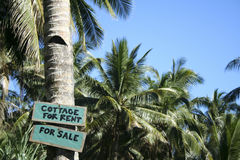Cottage for rent sign palm trees. Cottage for rent for sale sign on palm tree at edge of beach on tropical island in the philippines stock images