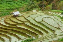 Cottage and rice terrace in rainy season beautiful. Stock Photos