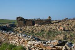 Cottage rovinato del muretto a secco nel Orkneys Fotografie Stock Libere da Diritti