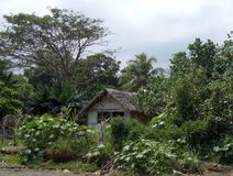 Cottage semplice in una giungla Immagini Stock Libere da Diritti