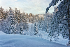 Cottage in snowy winter forest horizontal Royalty Free Stock Image