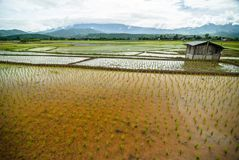 Cottage Terrace rice fields background Royalty Free Stock Photography