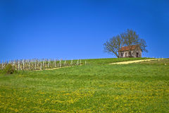 Cottage and vineyard on idyllic hill Royalty Free Stock Photography