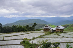 Cottage among young rice field on rice terrace,beautiful mountai Royalty Free Stock Image