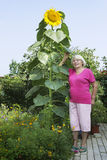 Cottager near a huge sunflower Stock Photography