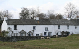 Cottages in Cumbria. Cottages in Cumbria with Herdwick sheep in a paddock at the front royalty free stock images