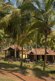Cottages dans une palmeraie. Photographie stock