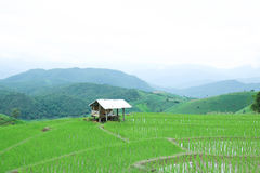 Cottages on green rice field with mountain background at pa bong piang village, Chiang Mai, Thailand. Cottages on green rice field with mountain background at Stock Images