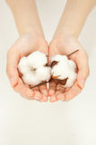 Cotton. Hand of woman who has raw cotton royalty free stock photography