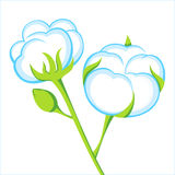 Cotton. Beautiful cotton icon - vector illustration royalty free illustration