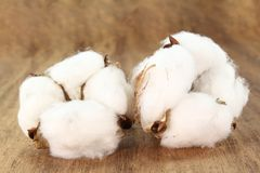 Cotton. Two white Cotton blossoms on a wood plate Royalty Free Stock Images