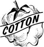 Cotton stock illustration