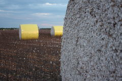 Cotton Bails. I had no idea Cotton was bailed like Hay until I seen theses bails. Each bail has the serial number of the bailer stamped on each bail Stock Photography