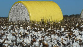 Cotton bale stock video footage