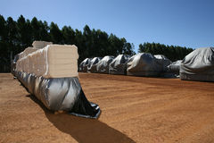 Cotton bales Stock Photography