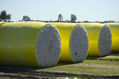 Cotton Bales. Large round cotton bales on a rural farm in Tennessee Royalty Free Stock Image