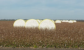 Cotton bales Stock Images