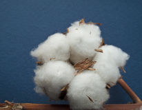 Cotton ball Stock Images