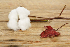 Cotton ball Royalty Free Stock Images