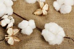 Free Cotton Balls Royalty Free Stock Photography - 45700037
