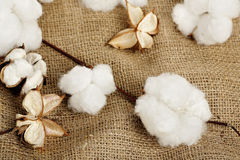 Cotton balls Royalty Free Stock Photography