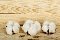 Cotton balls Stock Photos