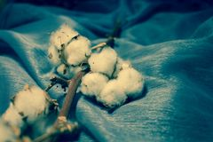 Cotton. Beautiful cotton balls. Natural, white decoration Royalty Free Stock Images