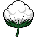 Cotton Blossom Stock Photo