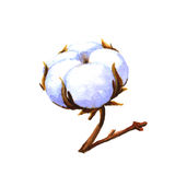 Cotton boll. Cotton plant. Watercolor illustration on a white background stock illustration